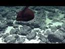 22 09 2018 Редкое морское``чудище``обнаружили наднеокеана Рыба большерот Морской угрь Дата 22 09 2018г Источник Рамблер