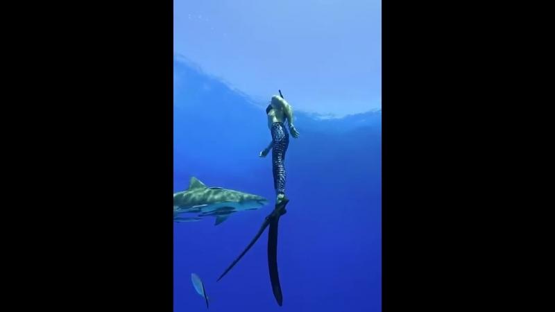Подводное плавание среди акул