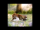 Человечность зверя - До слез трогательный ролик - ВОЛК [ Wolf Life ]