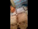 кушаем сухарики в бане