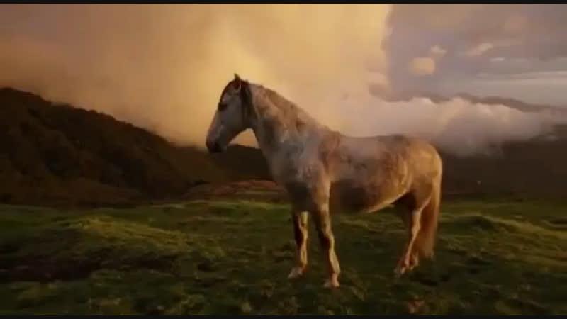 Horse 🖤