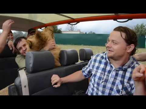 Лев ФИЛЯ дает жару посетителям Саванны !! СУПЕР ласковый лев