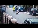 собака спасла от грабежа прохожего