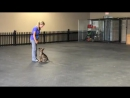 German Shepherd puppy obedience training _ 9 weeks old _ Valor K9 Academy, LLC