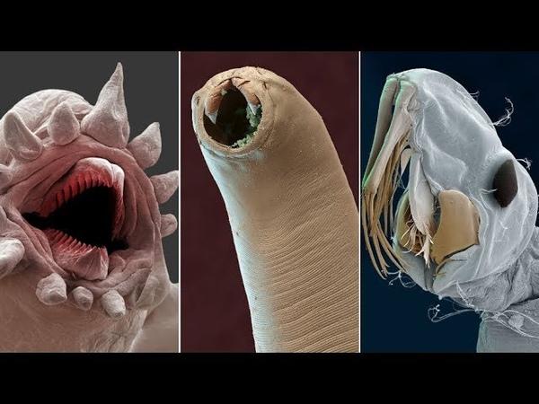 Amazing Electron Microscope Images Part 3
