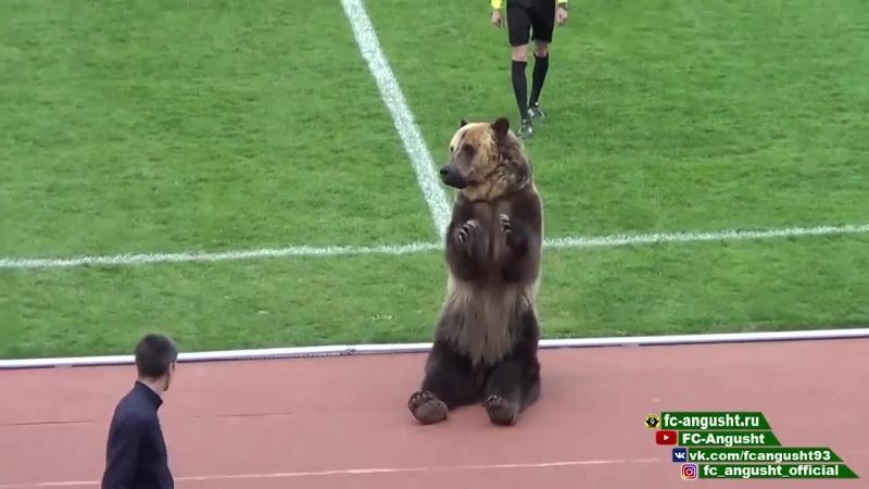В Пятигорске медведь по кличке Тима открыл матч первенства России по футболу
