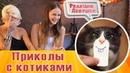Реакция девушек на приколы с котами и кошками №1