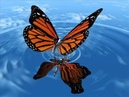 Crazy Town-Butterfly(Goyes 2013 bootleg) |free download|