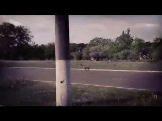 Олень в Горловке