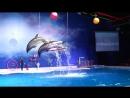 Best of the Dubai Dolphin Show 2018 HD