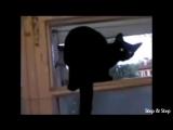 Кот гавкает пока хозяин не спалил))) Вообще прикол)))