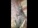 Кот из вентиляционной шахты спасен