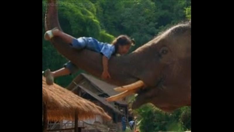 Слон и девочка