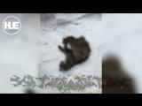 Пенсионерка из Тулы объездила всю Москву c мертвым котом в борьбе за справедливость