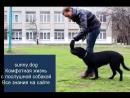 Гиперактивная собака обучение команде рядом Учим гиперактивную собаку команде рядом