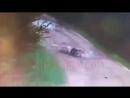 Мужчину загрызла заживо свора собак в Советском mp4