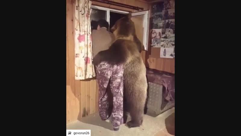 Медведь друг человека