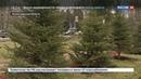 Новости на Россия 24 С мемориала памяти жертв катастрофы над Синаем украли шесть елок