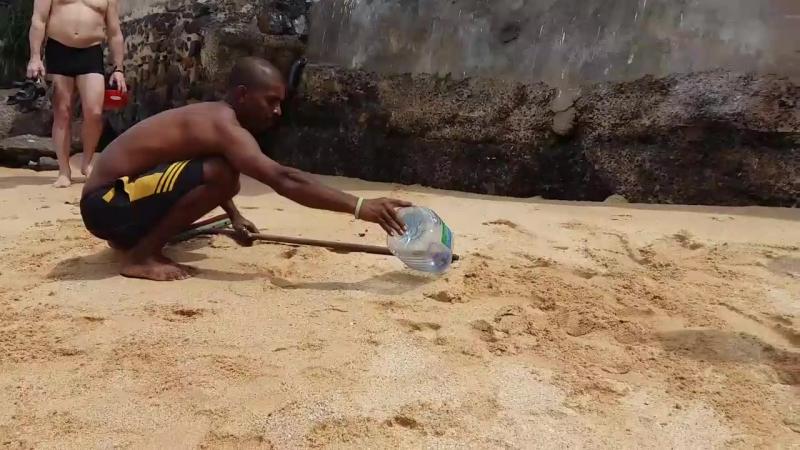 детеныш кобры на пляж выполз