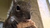 04.22.16 Seymour Enjoying a Henry's Peanut Stick