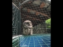 Спящая совушка. Видео Романа