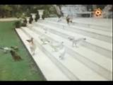 (Радж Капур Raj Kapoor) - Д ф (240p).mp4