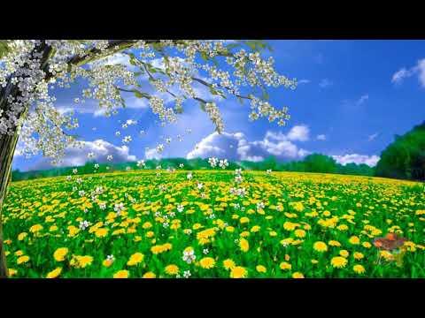 Прекрасная весна... чудесный бесплатный футаж для ваших видеоработ