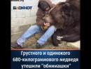 Грустного медведя успокоили обнимашки