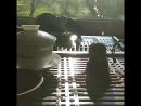 Чай и утро Сякухати и
