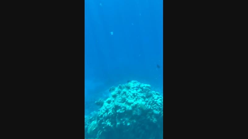 Моё погружение в подводный мир🔥🧜♀️🐬🐠🐟🐋