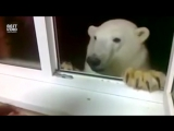 Полярный медведь в гостях