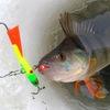Рыбалка / Рыболовные снасти