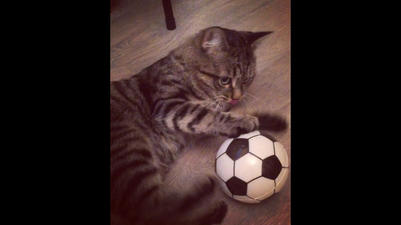 Мохнатый футболист Умка❤️