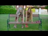 Alexis_Crystal_And_Arteya_-секс с двумя красотками на скамейке - vk.comfullnagif