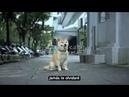 La historia de un perrito que hizo llorar al mundo entero Imposible no llorar