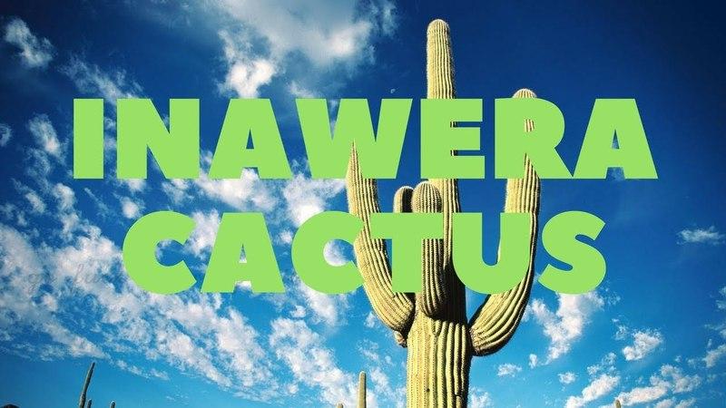 Самозамес и Миксология. Inawera Cactus - Полный обзор и рецепт.