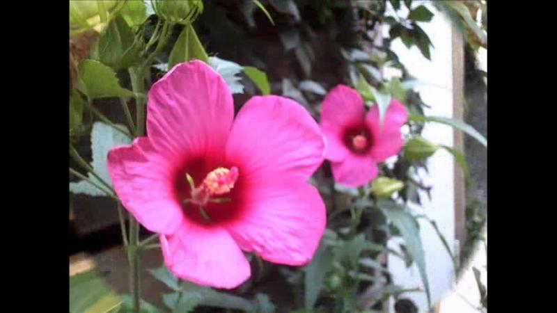Так вот ты какой цветочек аленький ...