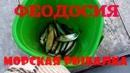 Феодосия Крым Морская рыбалка Бархатный сезон