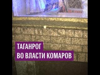 """""""Комариный апокалипсис"""" в Таганроге"""