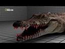 Животные мира Самые опасные Водный монстр Крокодил Супер чудо Среда обитания Корпус убийцы Нрав гада