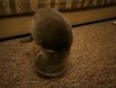 Жидкие коты.mp4