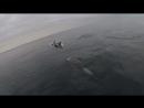Дельфины за полярным кругом ⁄ Dolphins in the Arctic circle