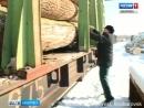 Вести Хабаровск Экспорт леса
