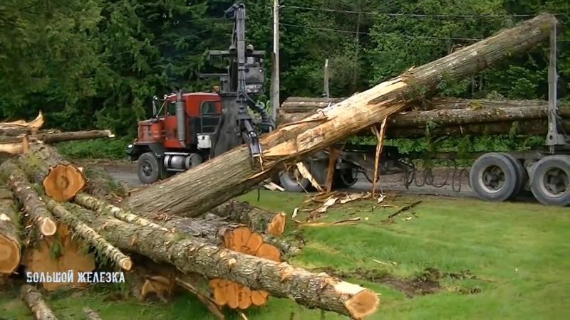 как буржуины валят и перевозят лес