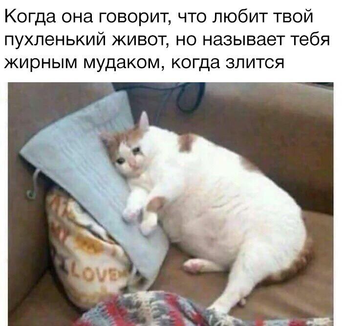 q9OYdcettTw - Манул - тоже котик