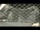 Ерке Есмахан Төреғали Төреәлі - Алло.mp4