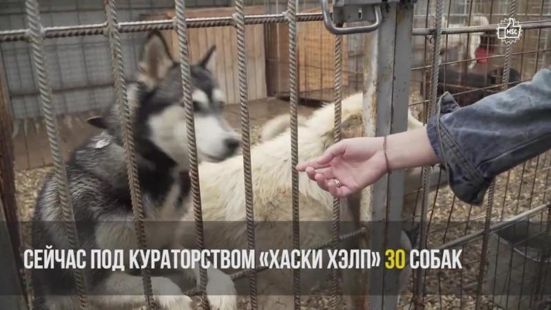 ХАСКИ ХЭЛП - Команда помощи хаски и СЕС (репортаж Like199, Москва)