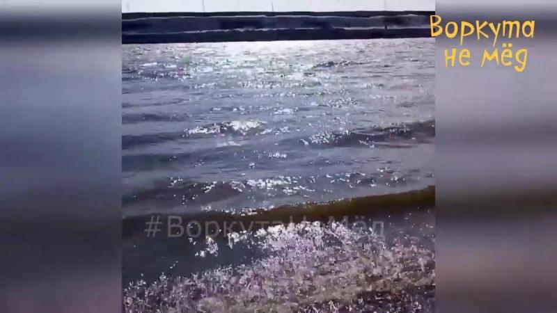ВоркутаНеМёд Воркутинский берег морской