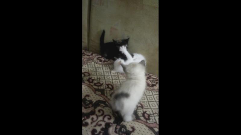 Кому очаровательных котят Аттракцион неслыханной щедрости