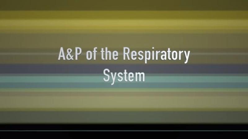 Анатомия и физиология дыхательной системы домашних животных Respiratory Anatomy and Physiology of the Companion Animal